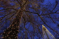 Bare tree and lamppost decorated with fairy lights at Liseberg Funfair in Gothenburg - FOLF03800