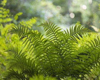 View of fern - FOLF03860