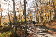 Person walking in forest during autumn - FOLF04490
