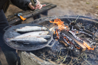 Seasoning fish to be cooked on a campfire - FOLF04784