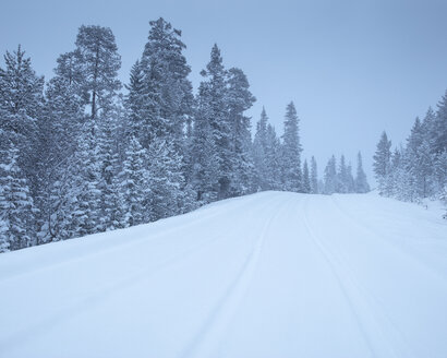 Rural road during winter in Fulufjallet National Park, Sweden - FOLF05060