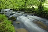 United Kingdom, England, Cornwall, Liskeard, River Fowey - RUEF01845