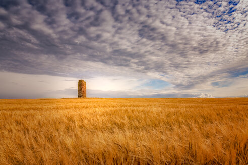 United Kingdom, Scotland, East Lothian, field of barley, Hordeum vulgare, with dovecote - SMAF00997
