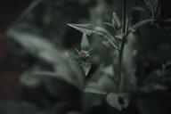 High angle view of ladybug on plant - CAVF31766