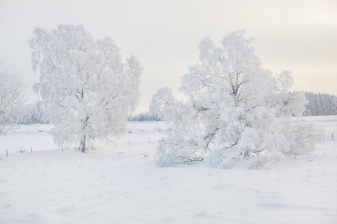Winter landscape with snowy trees - FOLF05968