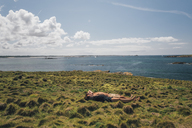 France, Brittany, Landeda, Dunes de Sainte-Marguerite, young couple lying in grass at the coast - GUSF00576