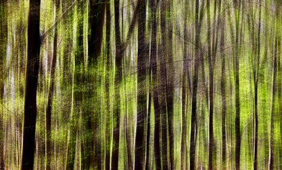 Close-up of a forest in spring - JTF00962