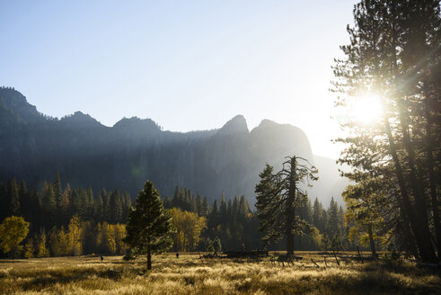 Scenic view of forest against mountain on sunny day - CAVF32271