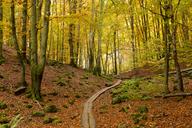 Wooden overpass through national park in autumn - FOLF07376