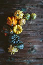 Various Ornamental pumpkins on wood - GIOF03883