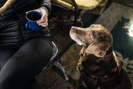 High angle view of dog sitting by woman drinking coffee in cottage - CAVF33995
