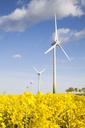 Filed of oilseed rape and wind turbines - FOLF09147