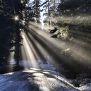 Sunlight through trees in winter - CAVF34395