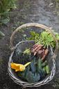 Freshly picked vegetables in wicker basket - FOLF09378