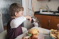 Boy feeding dog at dining table at home - SKCF00388