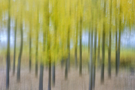Spain, Wicker cultivation in Canamares in autumn, blurred - DSGF01705