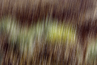 Spain, Wicker cultivation in Canamares in autumn, blurred - DSGF01711