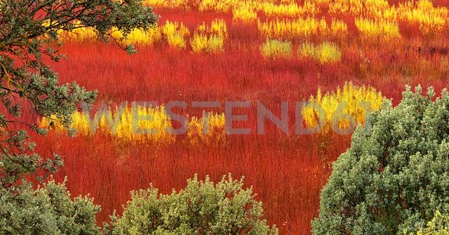 Spain, Wicker cultivation in Canamares in autumn - DSGF01738 - David Santiago Garcia/Westend61