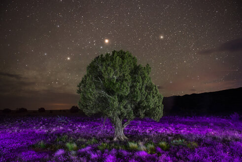 Majestic view of tree amidst flowering plants against star field - CAVF35002