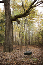 Tire swing hanging in forest - CAVF35089