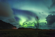 Norway, Lofoten Islands, northern lights - WVF01033