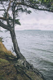 Tree growing by sea at cliff against sky - MASF00360