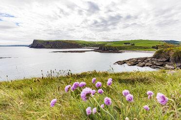 Scotland, Aberdeenshire, Coast near Pennan - WDF04562