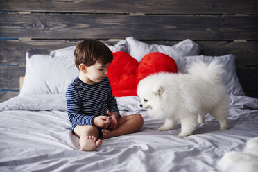 Litte boy and puppy together on bed - ABIF00274