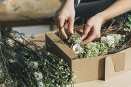 Woman's hands arranging flowers in a box, close-up - GUSF00623