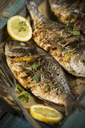 Grilled sea breams - MAEF12557