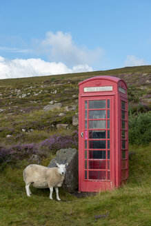 United Kingdom, Scotland, Highland, telephone booth and sheep - LBF01895