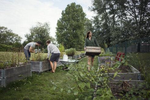 People working in community garden - MASF02214