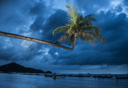 Palm tree over boats moored at sea against cloudy sky - CAVF35634