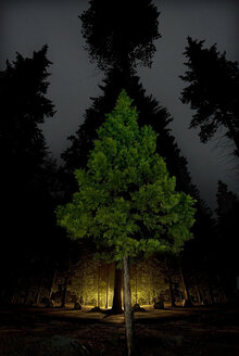 Digital composite image of trees growing in illuminated forest - CAVF35673