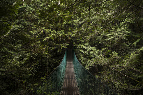 Tranquil view of footbridge in forest - CAVF35706