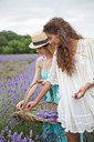 Friends looking down while picking flowers in lavender field - CAVF35996