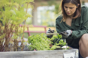 Mid adult woman writing label for plant in urban garden - MASF02261