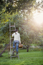 Rear view of woman standing on ladder by tree in orchard - MASF02932