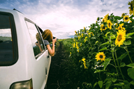Woman photographing sunflower field from car against cloudy sky - CAVF36493