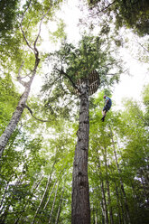 Low angle view of man climbing tree in forest - CAVF36931