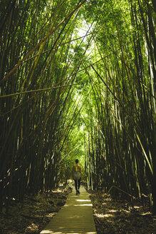 Rear view of woman walking on boardwalk in forest - CAVF36961