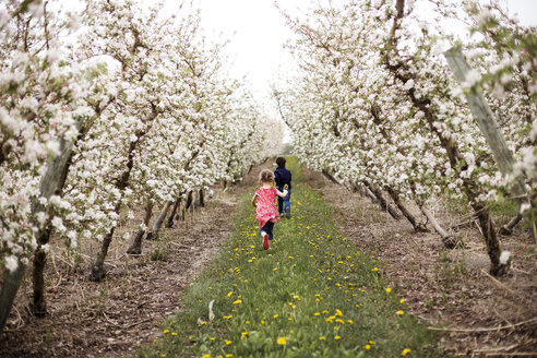 Rear view of siblings walking on grassy field amidst cherry trees against sky - CAVF37444
