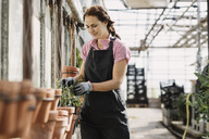 Woman checking leaves growing on potted plant in greenhouse - MASF03293