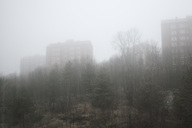 Trees on field by buildings during foggy weather - MASF03317