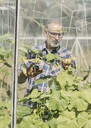 Mature male farmer checking on plants in greenhouse seen through glass window - MASF03482