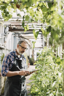 Mature gardener using digital tablet in greenhouse - MASF03485