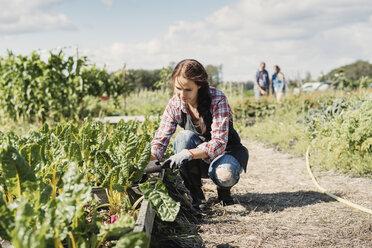 Female gardener crouching and planting on farm - MASF03635