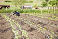 Female farmer examining plants at farm - CAVF38081