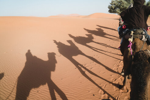 Rear view of man camel riding at desert during sunny day - CAVF38280