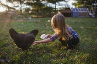 Girl feeding hen on field at farm - CAVF38322
